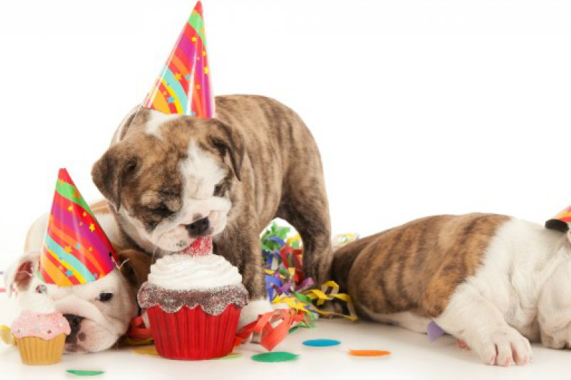 Puppyparty 6 Maart